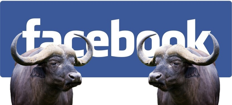 Facebook, la guerra alle bufale è iniziata