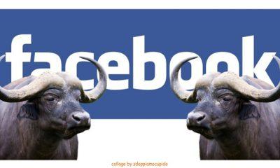 Facebook: le prime notizie etichettate come bufale