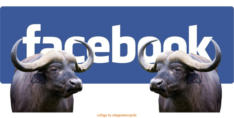 facebook bufale etichette